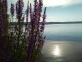 bolsena_luglio_2